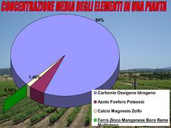 concentrazione_media_degli_elementi_in_una_pianta.jpg